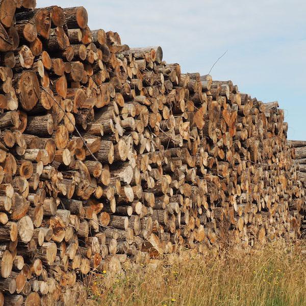Bois de chauffage u2013 Ch u00e2taignier u2013 longueur 2m Alliance Bois de Chauffage # Châtaignier Bois De Chauffage
