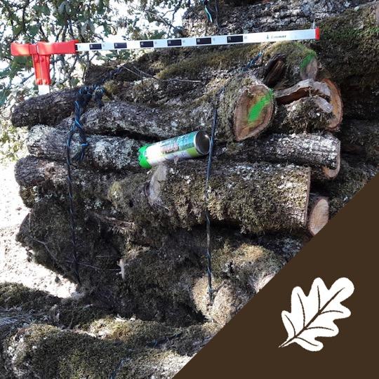 Alliance-Bois-de-Chauffage-Chêne-Fagot-pile-Logo