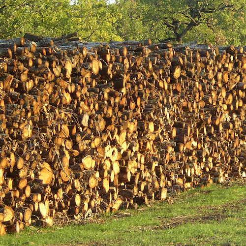 Alliance-Bois-de-Chauffage-Chêne-pile